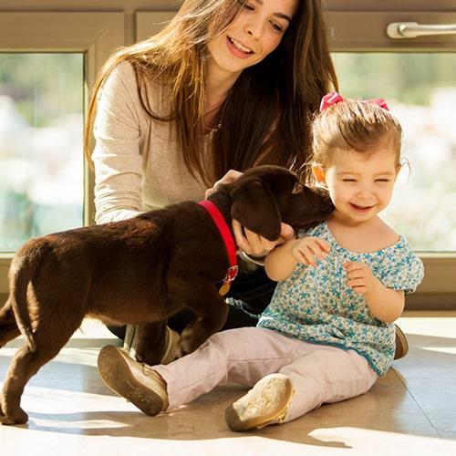 Limpieza y desinfeccióin respetuosa con las mascotas