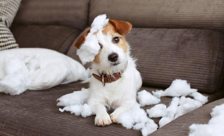 Cómo evitar el traspaso de los gérmenes de la mascota