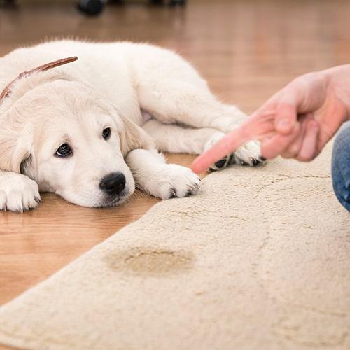 Eliminar olor orina mascotas